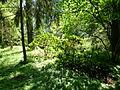 Arbres au jardin Albert Kahn 3.JPG