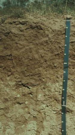 Aridisol wikipedia for Uses of soil wikipedia