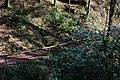 Around Geroldsau Waterfall 2020-03-13 12.jpg