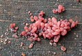 Ascocoryne sarcoides 105900943.jpg