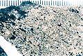 Aspicilia caesiocinerea-3.jpg