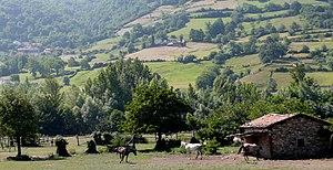 Ganado caballar en Asturias