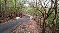 Asurankund Deep Forest - panoramio (3).jpg