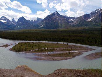 Athabasca River, Icefields Parkway (2987364327).jpg