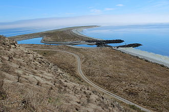 Protection Island National Wildlife Refuge - Hillside of rhinoceros auklet burrows,  Protection Island