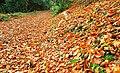 Autumn at Huntly Wood near Banbridge (2) - geograph.org.uk - 1046164.jpg