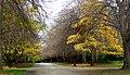 Autumn at the Christchurch Botanical Gardens. (14130557508).jpg