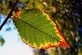 Autumn in qom- iran پاییز در قم 03.jpg