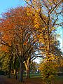 Autumnal Sutton Green, SUTTON, Surrey, Greater London.jpg