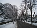 Avenue Road in the snow - geograph.org.uk - 455342.jpg