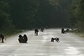 Baboons on the road (394259072).jpg