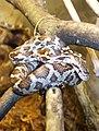 Baby black rat snake.jpg