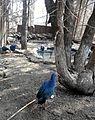 Bakı Zooloji Parkı - 11.JPG
