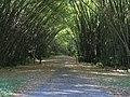 Bamboo Cathedral Chaguaramas Trinidad.jpg