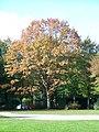 Baum im Schönauer Park - panoramio.jpg