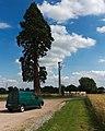 Baum und Auto - panoramio.jpg