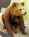 Bear taxidermied.jpg