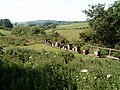 Bee hives close to the old railway line - geograph.org.uk - 252013.jpg