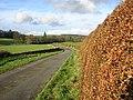 Beech Hedge - geograph.org.uk - 289502.jpg