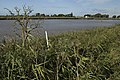 Bend in the Ouse - geograph.org.uk - 1522051.jpg