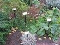 Benjamin Rush Medicinal Plant Garden - IMG 7245.JPG