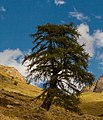 Bergtocht van Gimillan (1805m.) naar Colle Tsa Sètse in Cogne Valley (Italië) 034.jpg