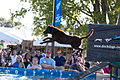 Big Air Dog Jumping Contest (4946495792).jpg