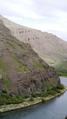 Bighorn-sheep--yakima-river-canyon 8682856576 o.png
