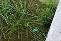 Bioswale, vera katz park (2492235537).jpg