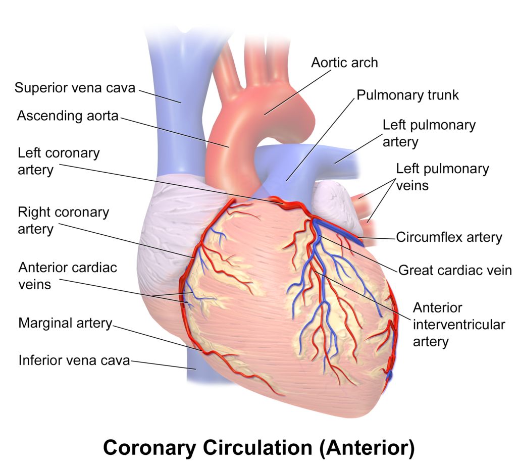 Pathology Outlines - Coronary vessels