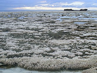 A major coral bleaching event took place on this part of the Great Barrier Reef in Australia Bleached coral (24577819729).jpg