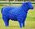 Blue Sheep 05.jpg