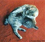 Bobtail Tabby Cat MISSI WITH BABY-1996.jpg