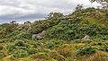 Bodmin Moor, Cornwall-9103.jpg