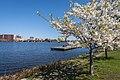 Boston - panoramio (31).jpg