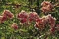 Botanic garden (7462522802).jpg