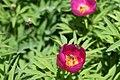 Botanical garden – spring 9151.jpg