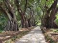 Botanical garden El'Hamma 2.jpg