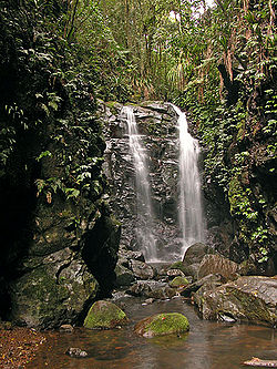 Box Log Falls, Lamington National Park, Queensland, Australia.