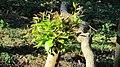 Branch leaves.jpg