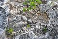 Breccia-filled dissolution pit (Sandy Point Northeast roadcut, San Salvador Island, Bahamas) 5 (16467598902).jpg