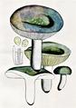 Bresadola - Russula grisea.png