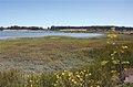 Breuner Ranch Marsh (19092378822).jpg