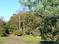 Bridleway near Hankley Cottage - geograph.org.uk - 272496.jpg