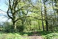 Bridleway through woodland at Chewton Mendip, Somerset.jpg