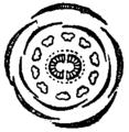 Britannica Saxifragaceae Saxifrage Diagram.png