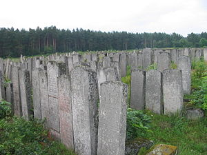 Brody - Jewish tombstones at New Jewish Cemetery in Brody. The Cemetery numbers ca. 20,000 burials