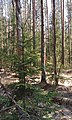 Bryansky District, Bryansk Oblast, Russia - panoramio (112).jpg