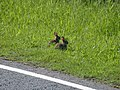 Bunnies^ - geograph.org.uk - 837848.jpg