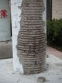 Burst column.JPG